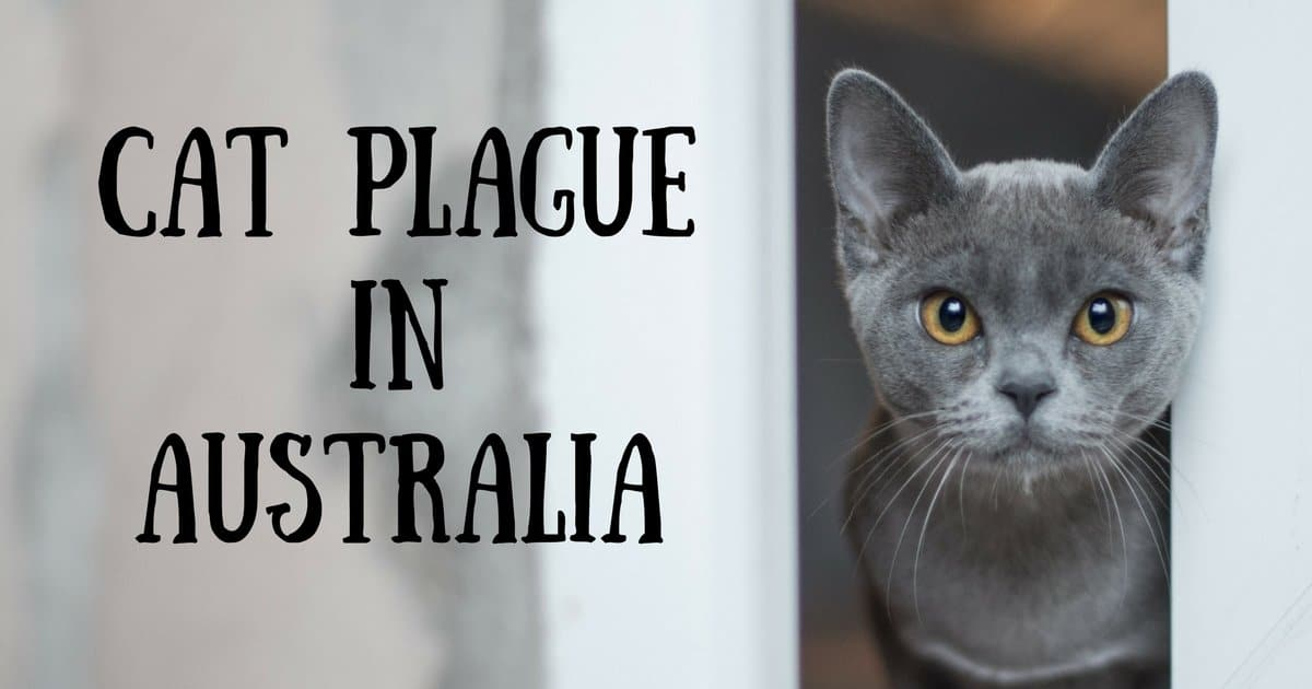 Cat plague in Australia