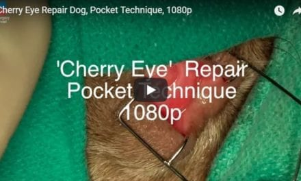 Cherry Eye Repair Dog, Pocket Technique Video by The Vet Surgery Channel
