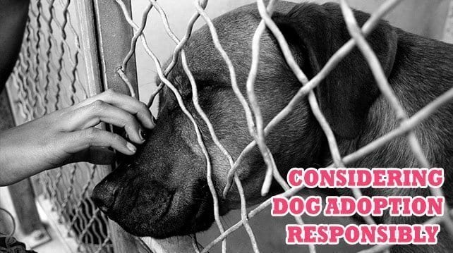 Considering Dog Adoption Responsibly