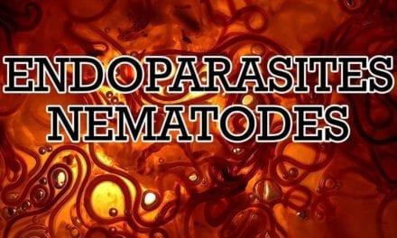 Endoparasites: Nematodes