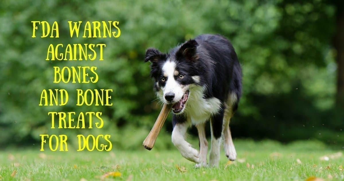 FDA warns against bones and bone treats for dogs