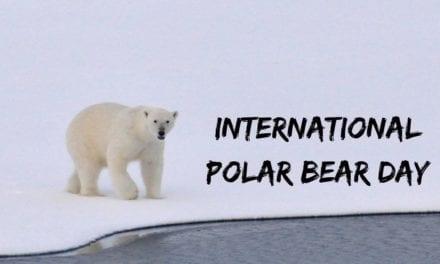 International Polar Bear Day