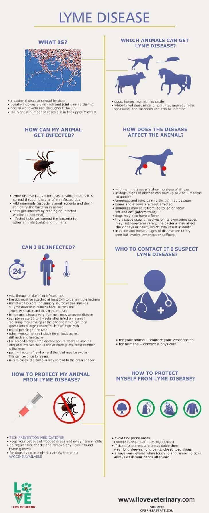Lyme disease info graphic