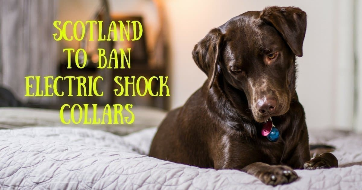 Scotland to ban electric shock collars