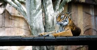 zoo i love veterinary