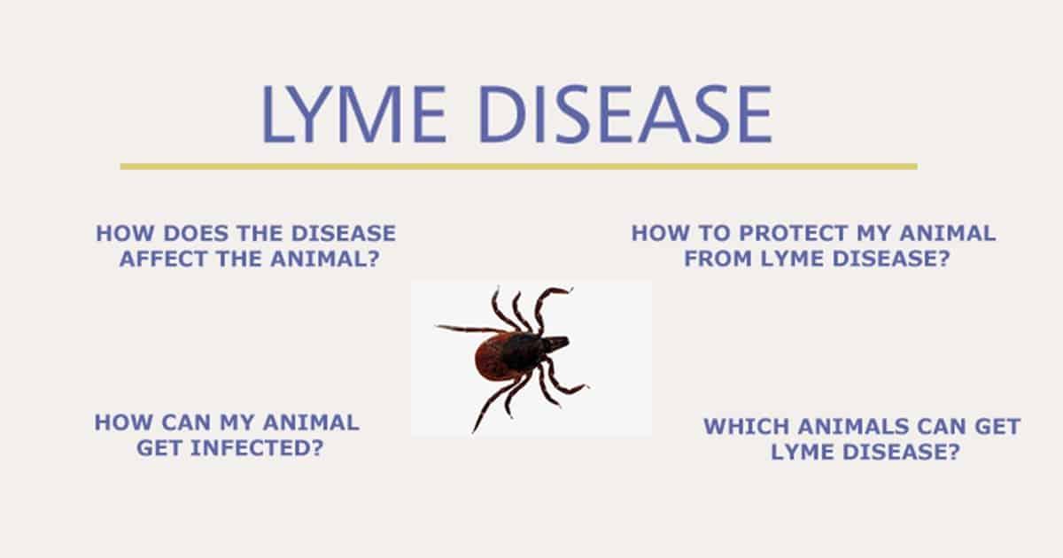 lyme disease I Love Veterinary