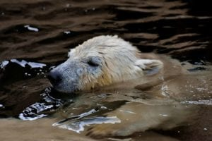 polar bear 3161354 1920 I Love Veterinary - Blog for Veterinarians, Vet Techs, Students