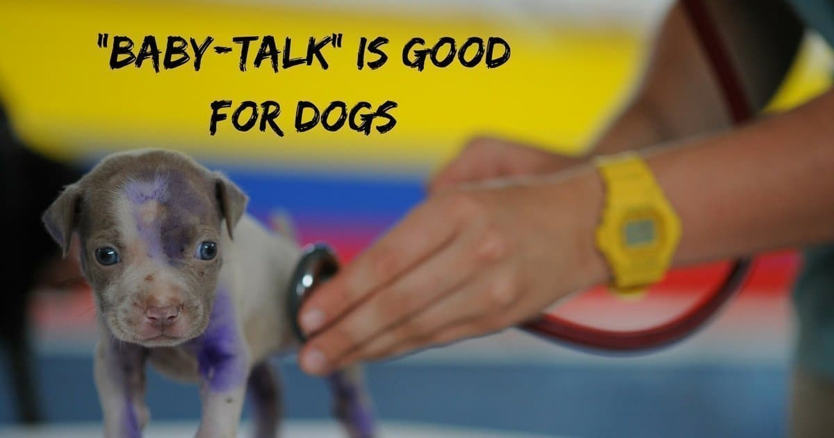 """Baby-talk"" is good for dogs"