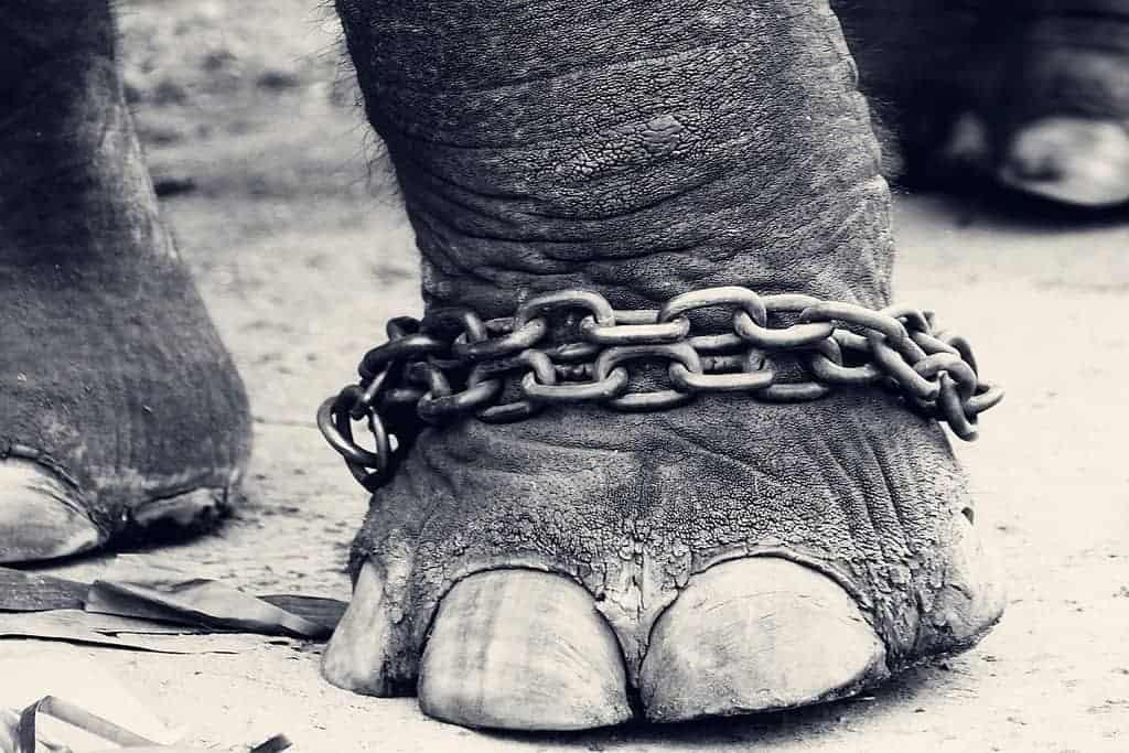 i love veterinary animal cruelty prevention month