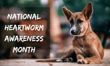 National Heartworm Awareness Month – April 2019