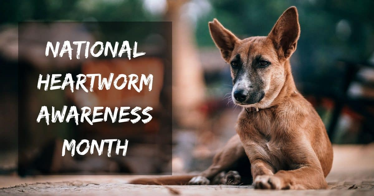 National Heartworm Awareness Month – April 2019