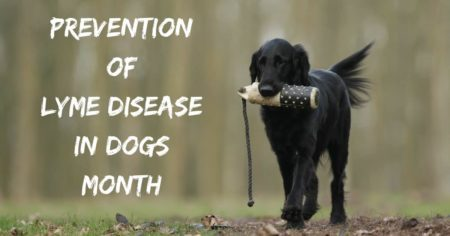 Prevention of Lyme Disease in Dogs Month – April 2019