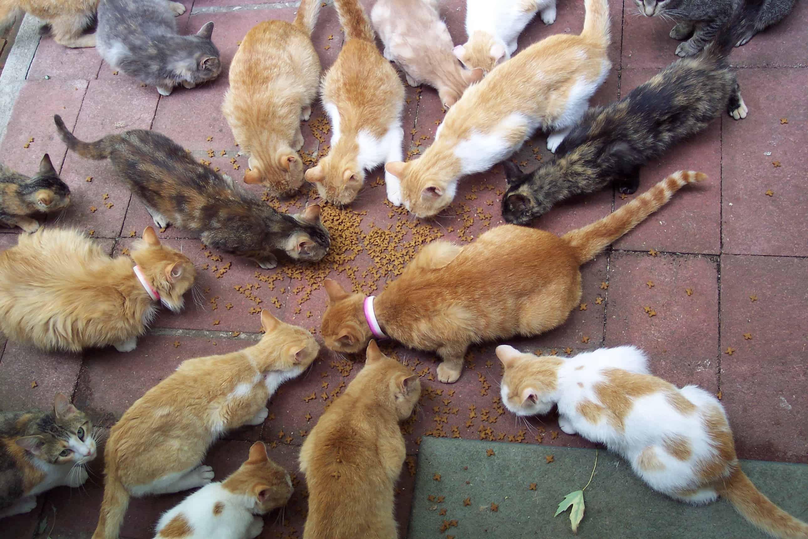 Animal cruelty prevention month april 2018 i love veterinary