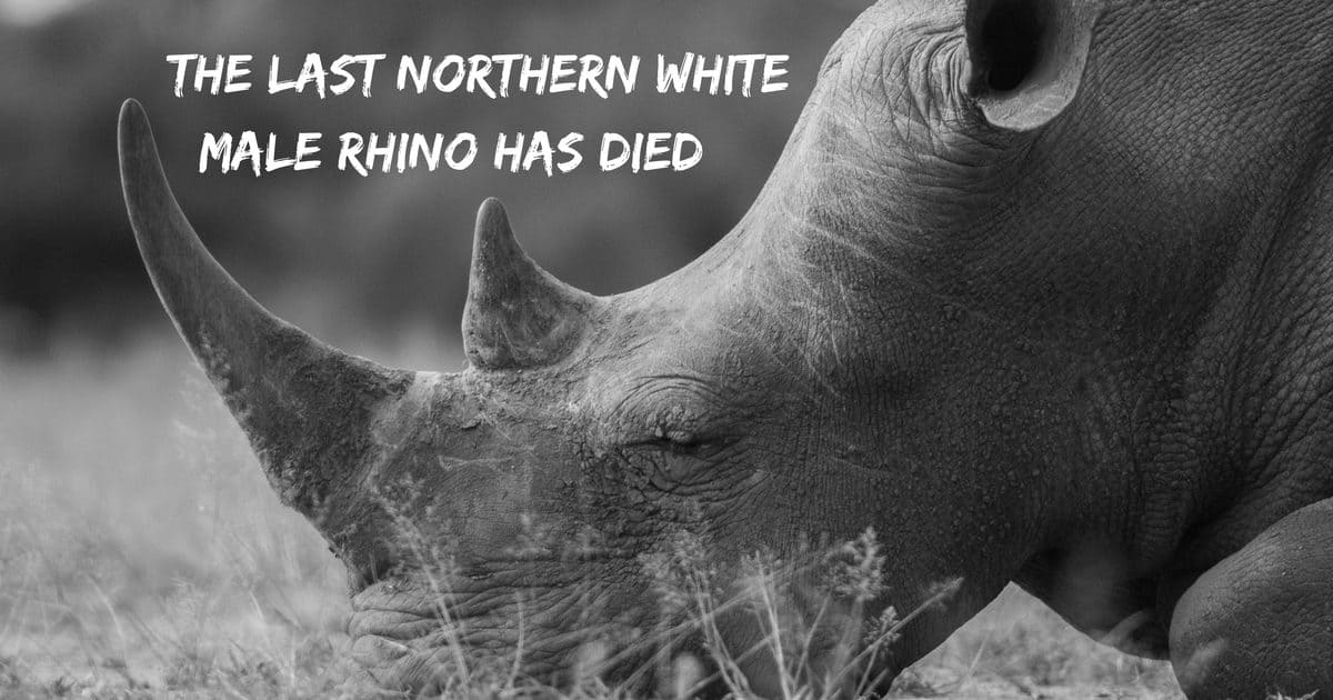 The last northern white male rhino has died…
