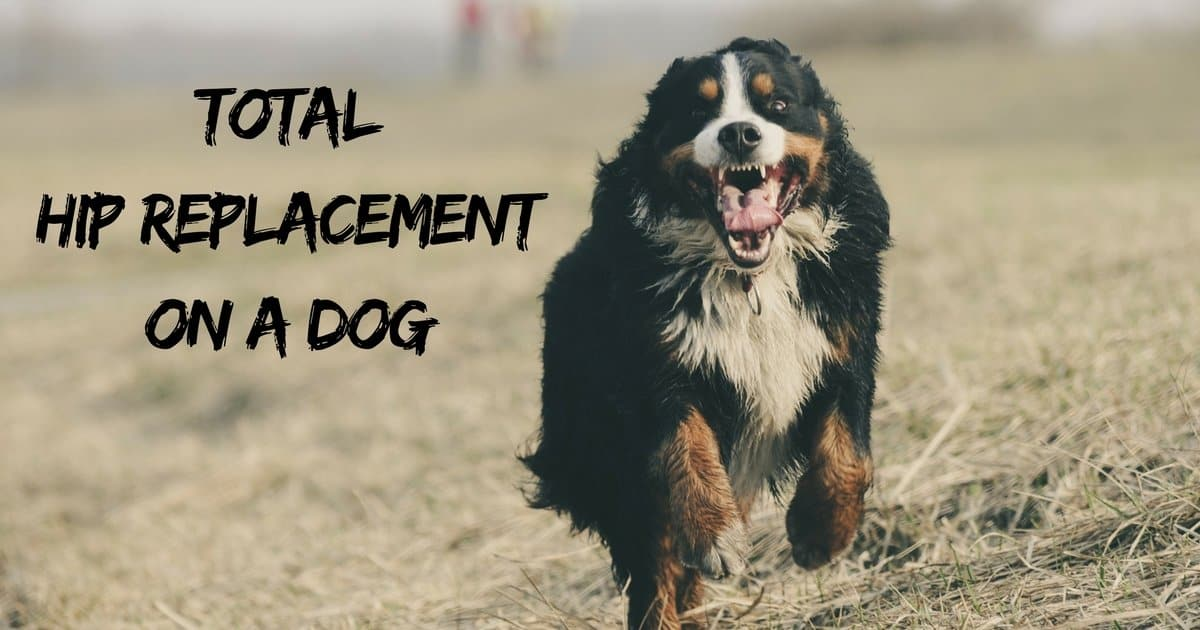 Total hip replacement on a dog