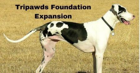 Tripawds Foundation Expansion