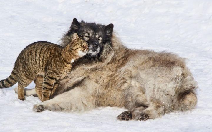 cat and dog love I love veterinary