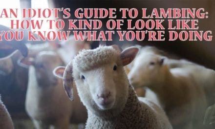 An idiot's guide to lambing: how to kind of look like you know what you're doing by Harriet Long