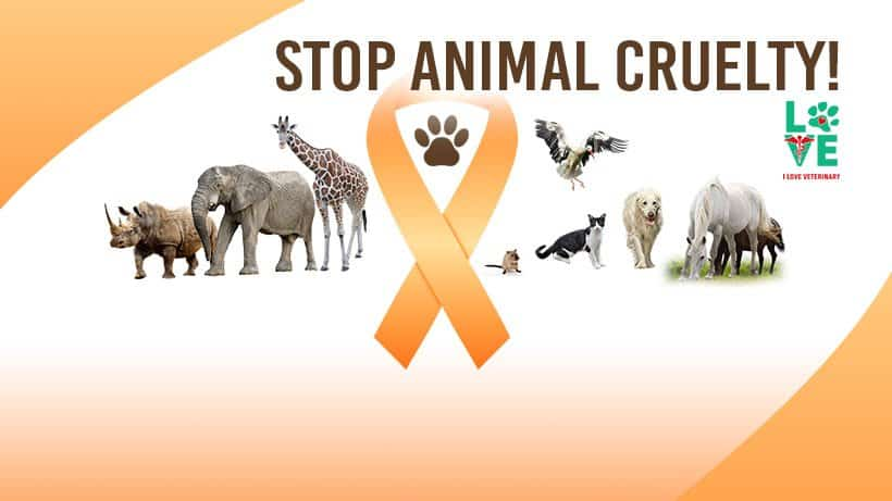 cover photo facebook animal cruelty prevention month