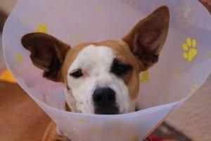 dog 1191676 1920 I Love Veterinary - Blog for Veterinarians, Vet Techs, Students