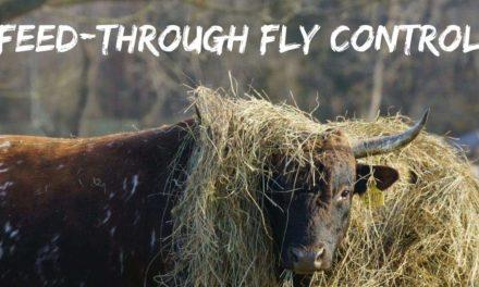 Feed-through fly control