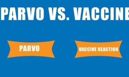 Parvo vs. Vaccine