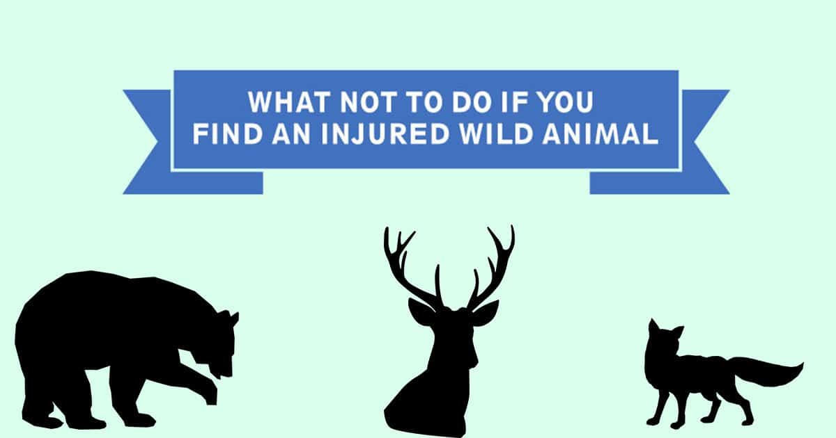 What NOT to do if you find an injured wild animal