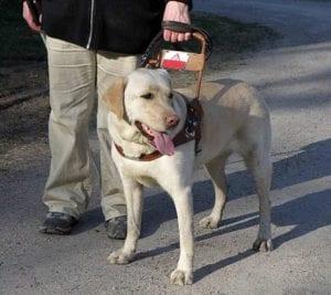 6762043219 e13d0fe9cd b I Love Veterinary - Blog for Veterinarians, Vet Techs, Students