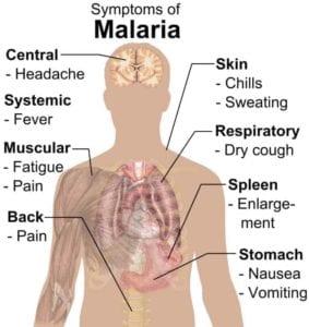 724px Symptoms of Malaria I Love Veterinary - Blog for Veterinarians, Vet Techs, Students