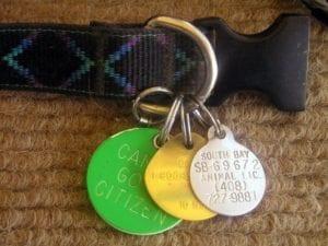 DogTags license fxwb I Love Veterinary - Blog for Veterinarians, Vet Techs, Students