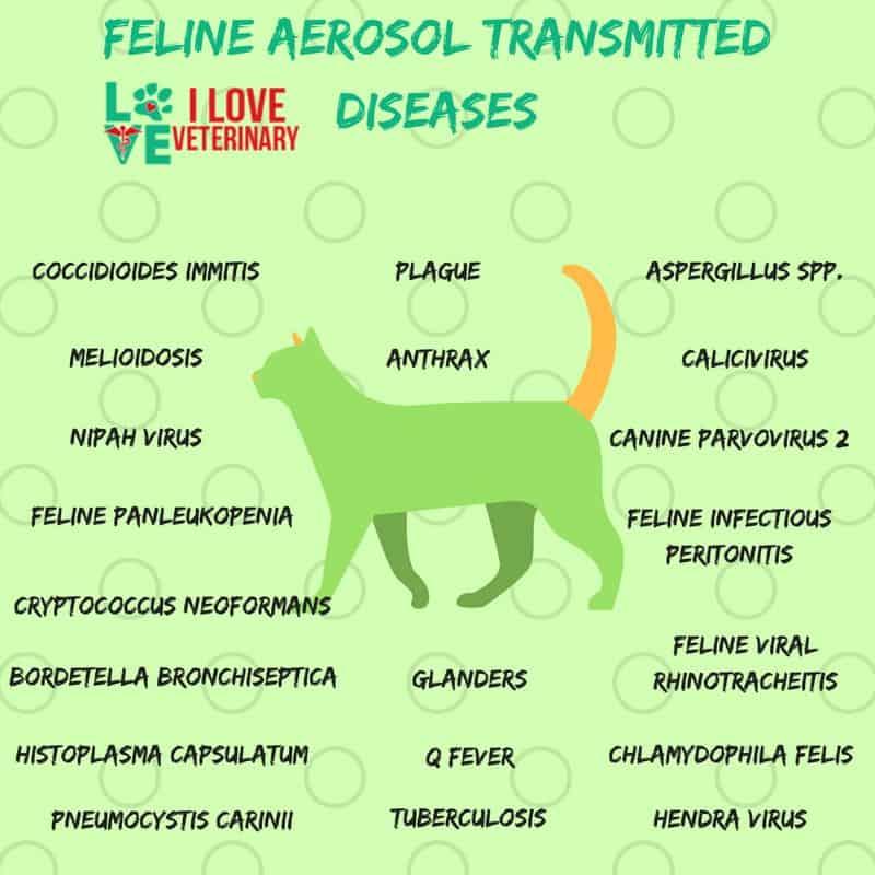 Feline Aerosol Transmitted Diseases1 I Love Veterinary - Blog for Veterinarians, Vet Techs, Students