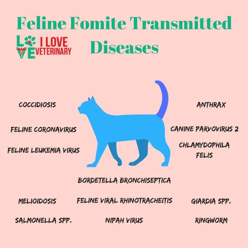 Feline Fomite Transmitted Diseases I Love Veterinary - Blog for Veterinarians, Vet Techs, Students
