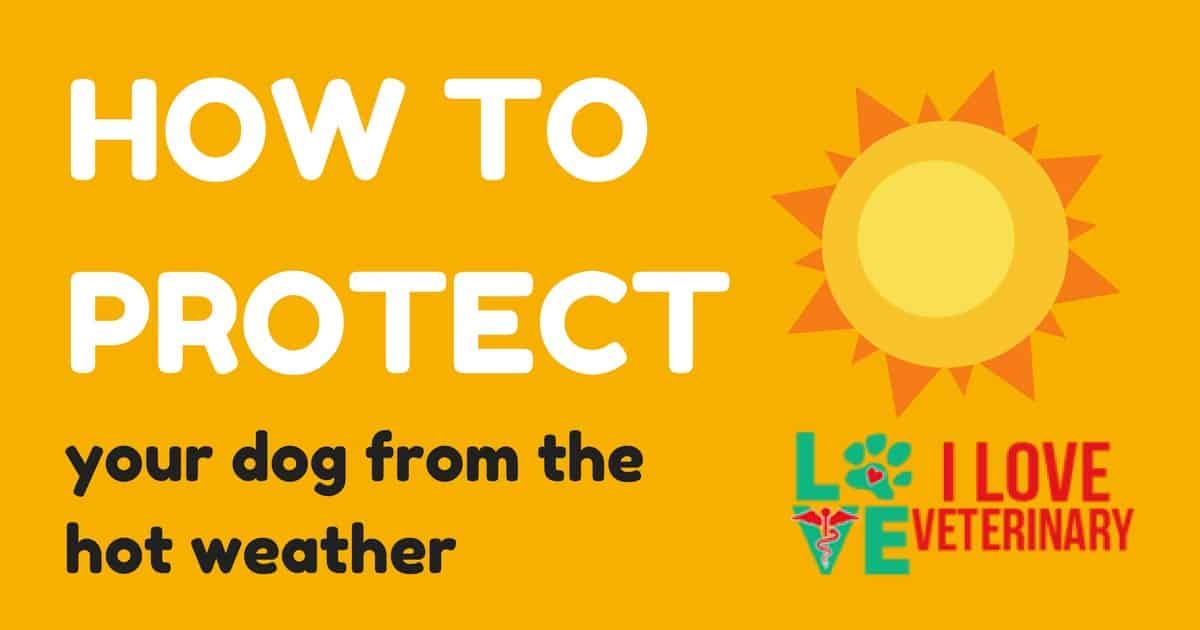 summer protection for dogs