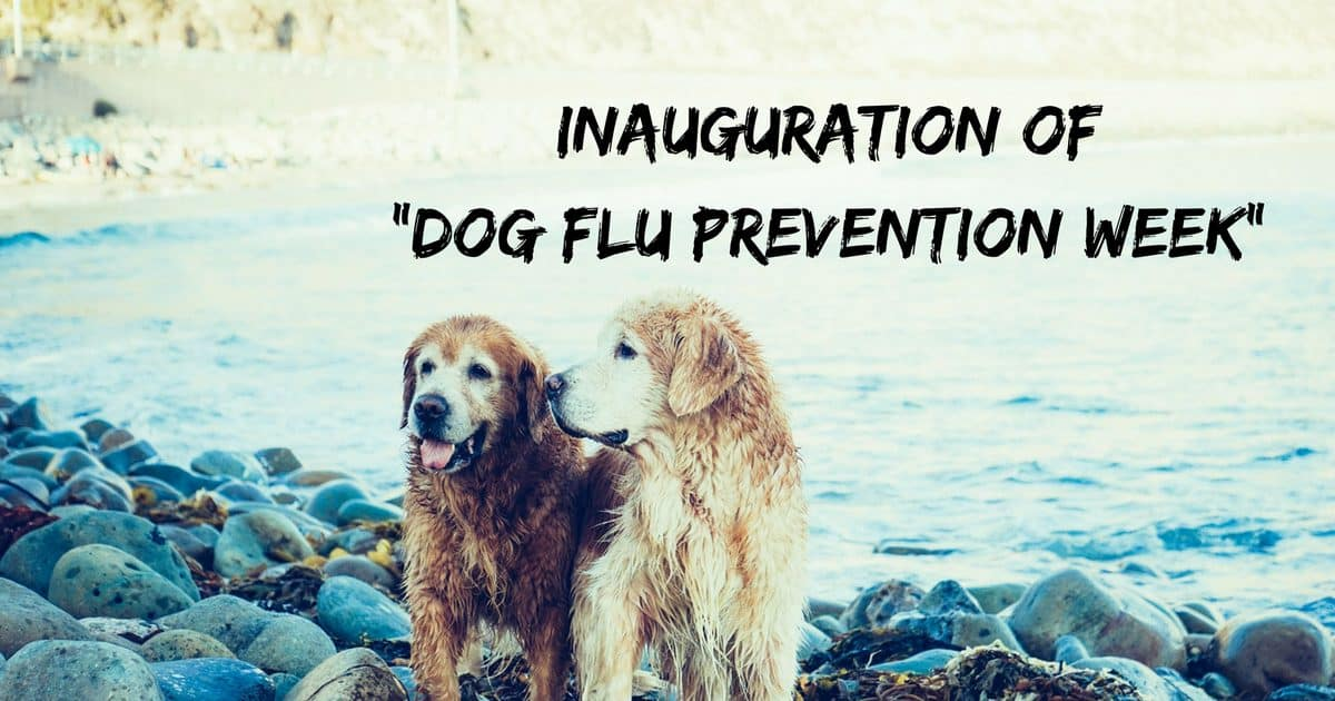 "Inauguration of ""Dog Flu Prevention Week"""