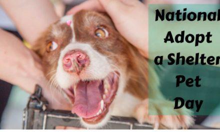 National Adopt a Shelter Pet Day – April 30