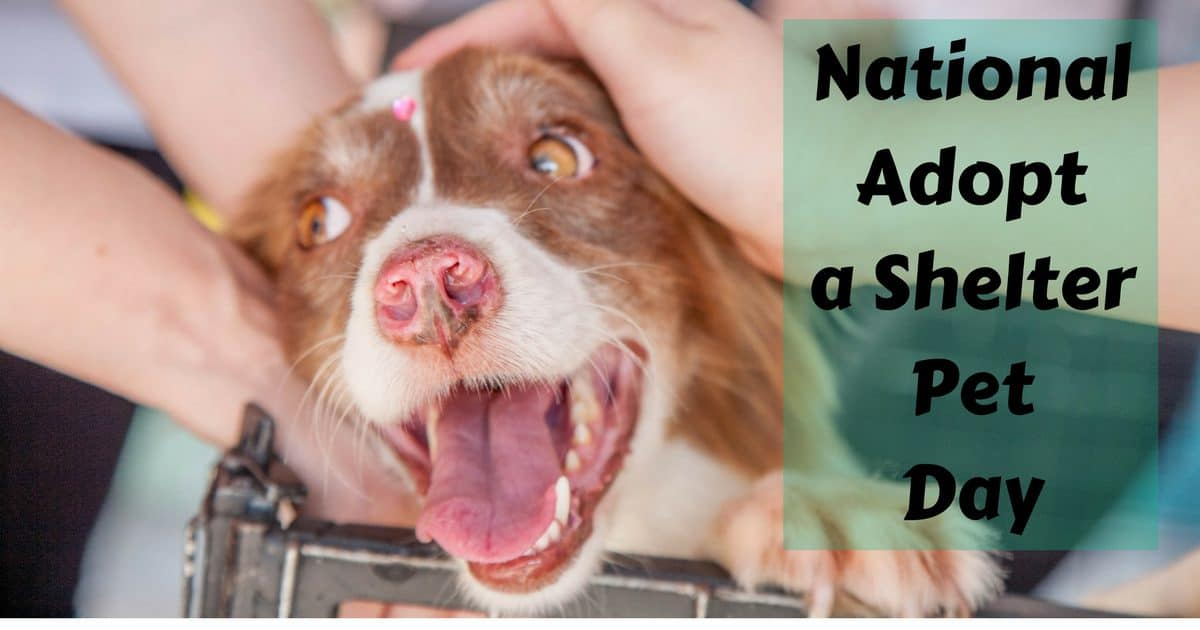 National Adopt a Shelter Pet Day – April 30