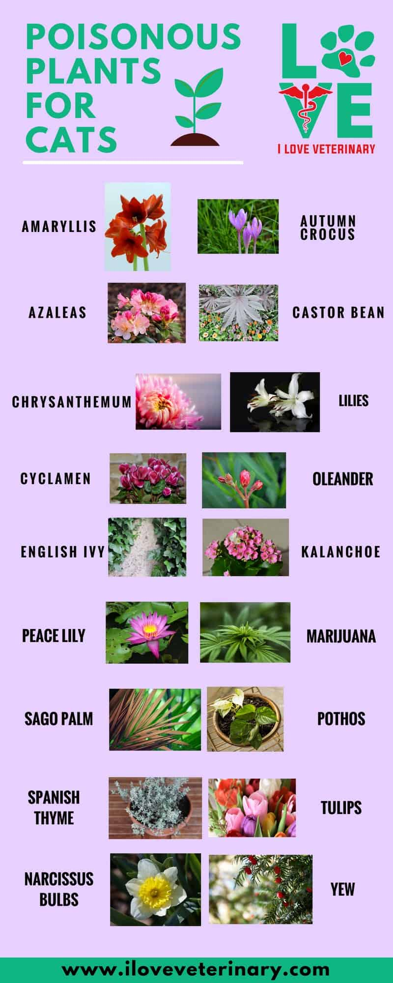 flowers that are poisonous to cats