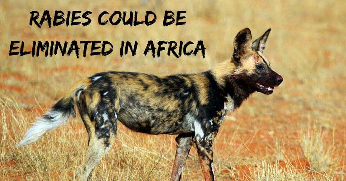 Rabies could be eliminated in Africa