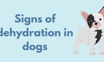 Signs of dehydration in dogs