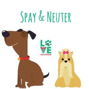 Spay Neuter1 I Love Veterinary - Blog for Veterinarians, Vet Techs, Students