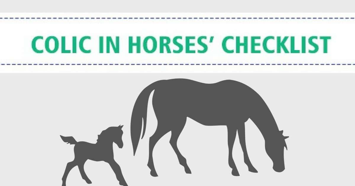 Colic in Horses – Checklist
