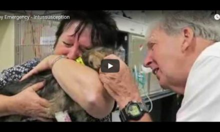 Puppy Emergency – Intussusception, Video by Dr.Gerardo Poli