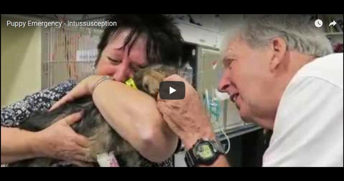 Puppy Emergency – Intussusception, Video by Dr.Gerardo Poli