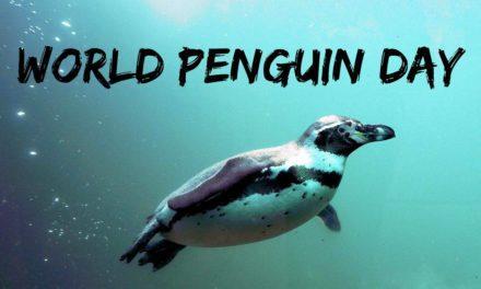 World Penguin Day – April 25