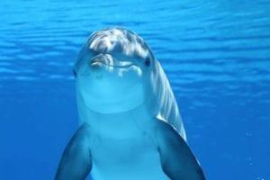 dolphin 203875 1920 I Love Veterinary - Blog for Veterinarians, Vet Techs, Students