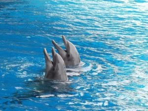 dolphin 2687078 1920 I Love Veterinary - Blog for Veterinarians, Vet Techs, Students