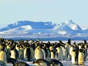 emperor penguins 429127 1920 I Love Veterinary - Blog for Veterinarians, Vet Techs, Students