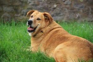 golden retriever 1809044 1920 I Love Veterinary - Blog for Veterinarians, Vet Techs, Students