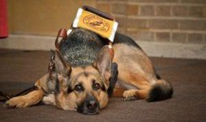 guidedog I Love Veterinary - Blog for Veterinarians, Vet Techs, Students