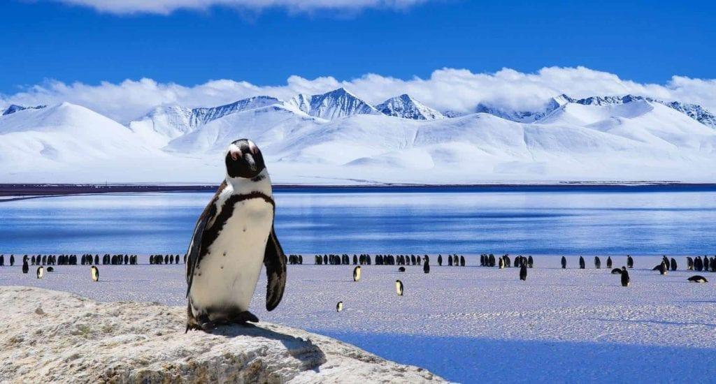 ice 1079233 1920 I Love Veterinary - Blog for Veterinarians, Vet Techs, Students